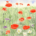 See details for Poppy & Corncockle Extravaganza here