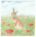 See details for Sunny Bunny here