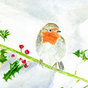 See details for Snowy Robin here